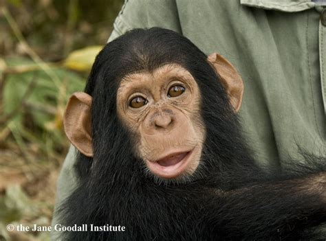 Donate to Jane Goodall Institute
