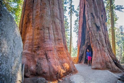 Sequoia National Park | Out West Again