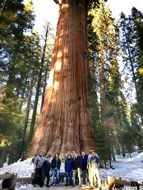 Sequoia National Park, CA - General Sherman: World's